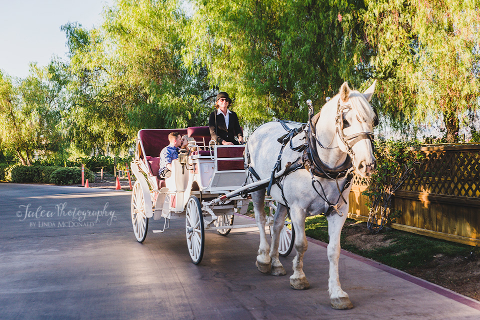 Couple in Horse Drawn Carriage winery South Coast at South Coast Winery Temecula